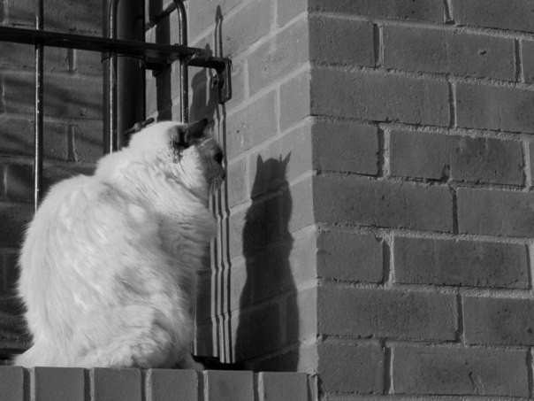 Смешные приколы про кошек 2015 года