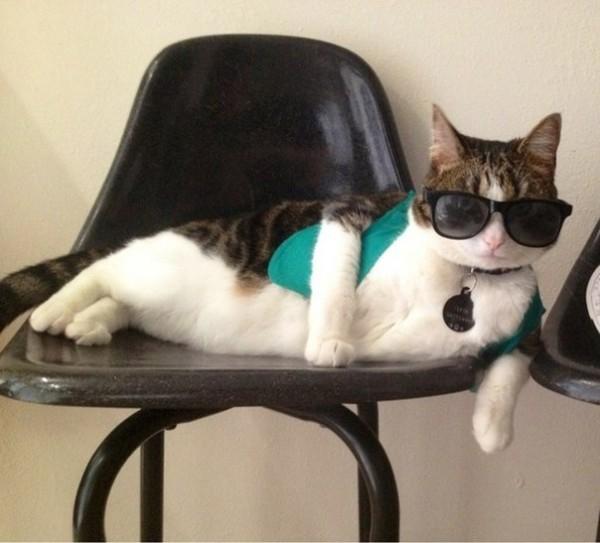 Когда тебя нет дома твой кот отдыхает