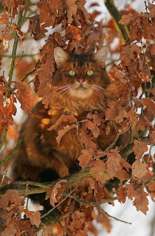 Красивая кошка в листве