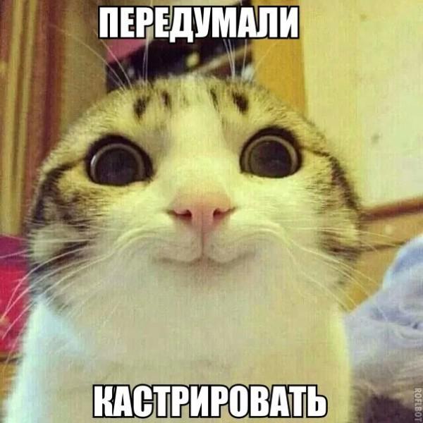 Коты фото без надписей
