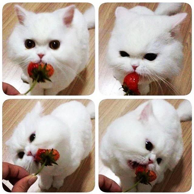 Кошка с клубничкой
