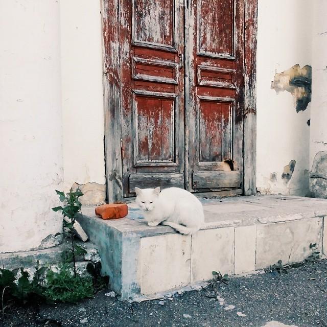 Фактурная дверь и кошка