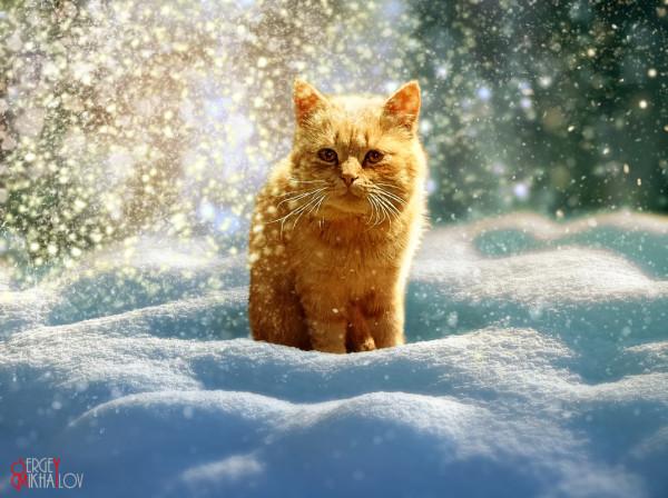 Красивый рыжий снежный кот