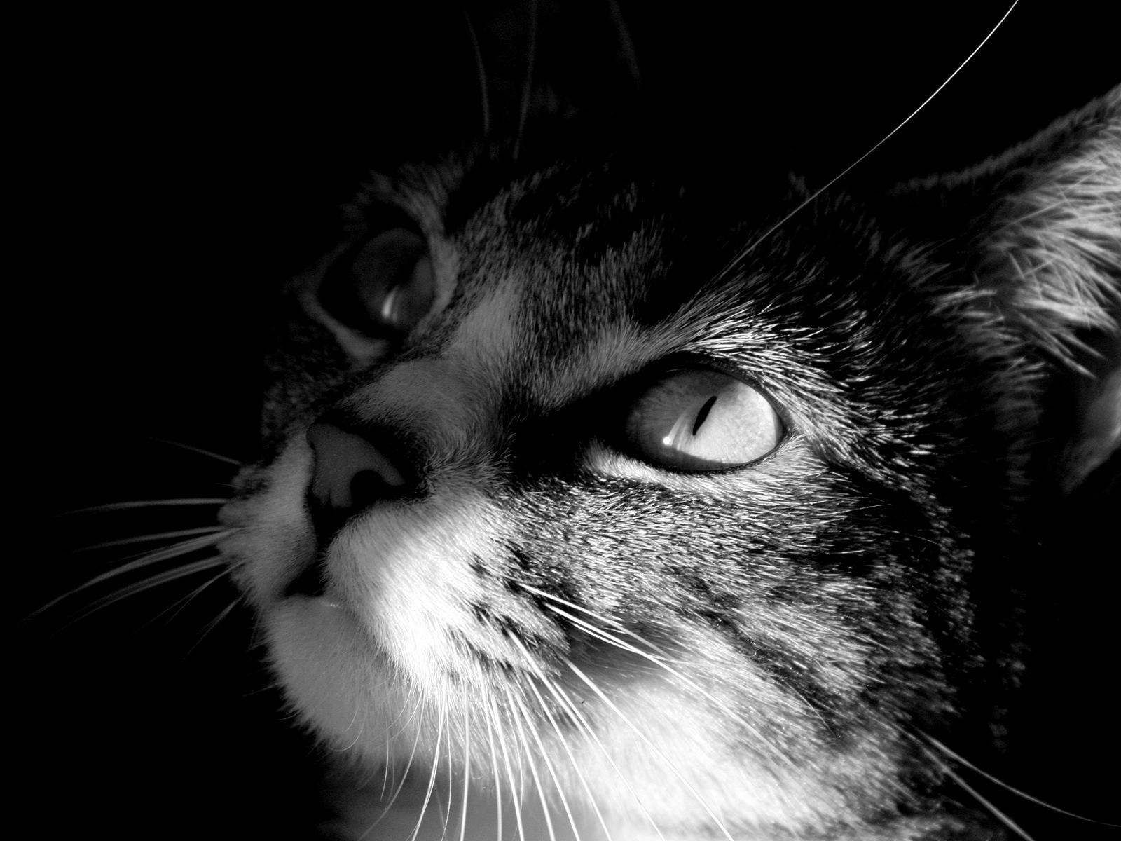 Черно-белая картинка котика.