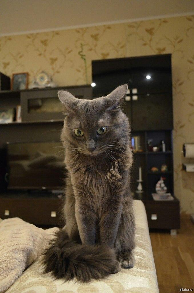 Кот в непонятках