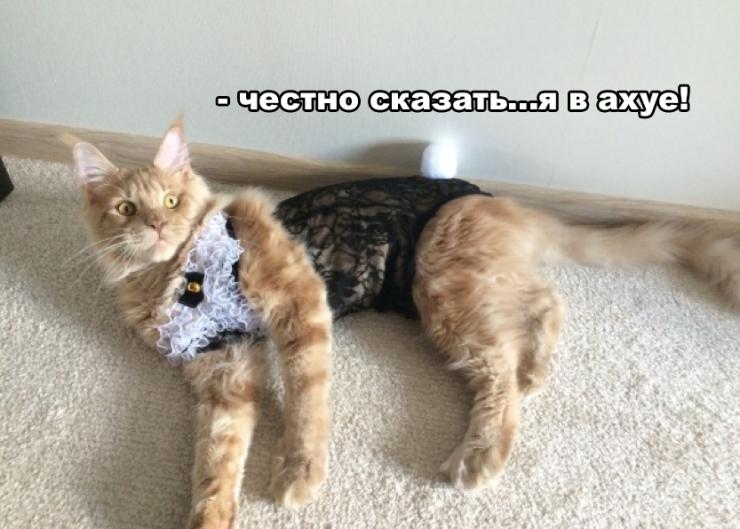 Жене набор не подошел, зато подошел коту