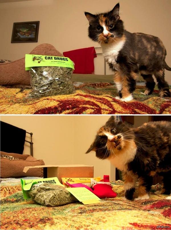 Кошка нашла мяту