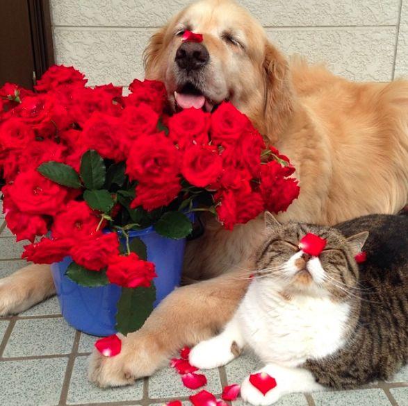 Довольная собака и кот