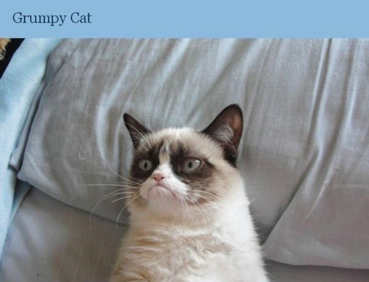 Самые знаменитые коты интернета