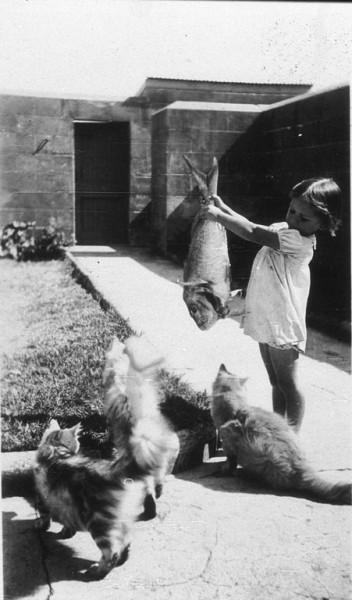 Девочка дразнит котов