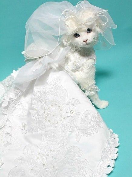 Кошка невеста фото