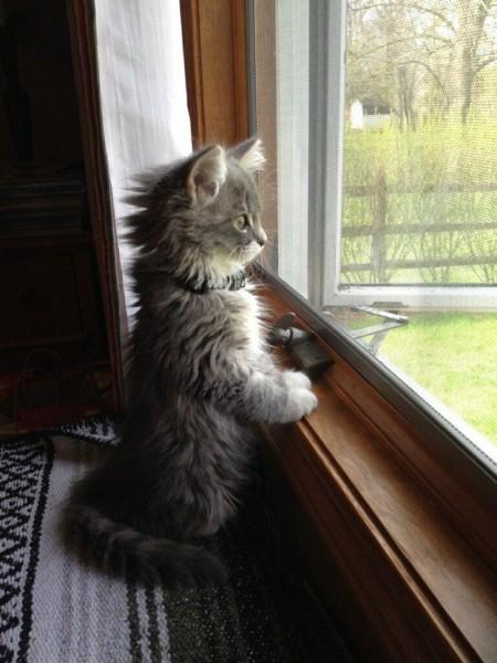 Фото кота у окна