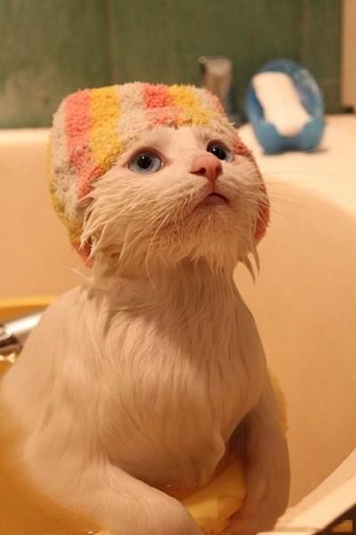 Кот после ванны