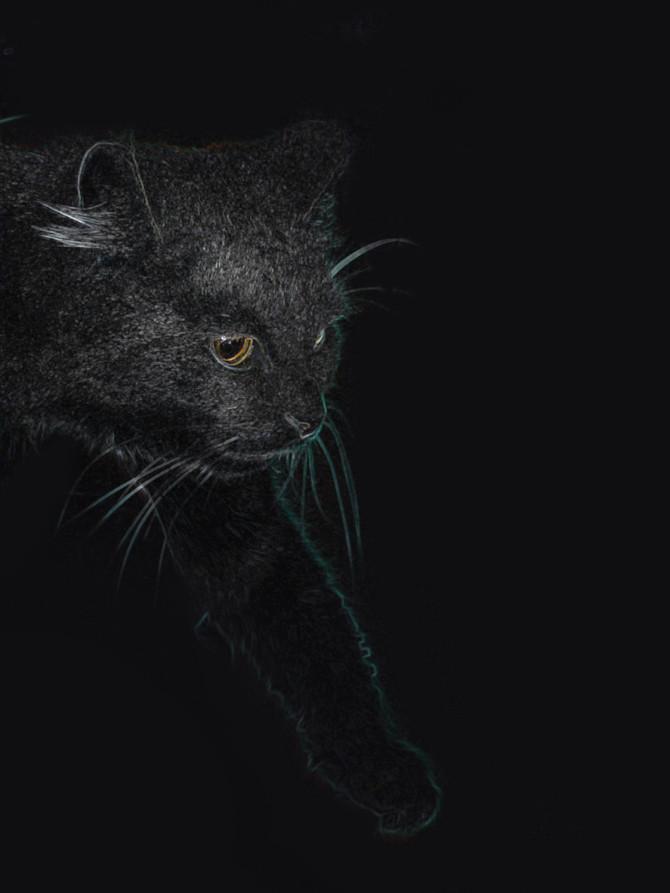 Черная кошка на черном фоне