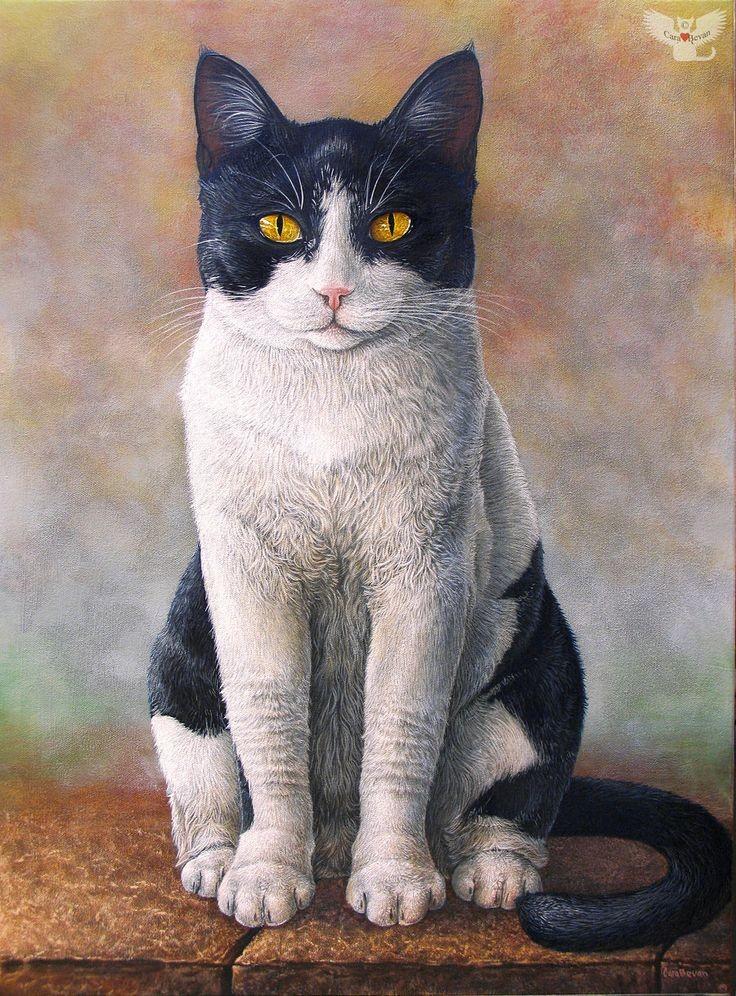 Черно белый кот с желтыми глазами