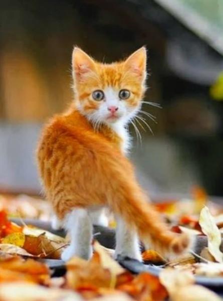 Рыжий котенок и осенние листья