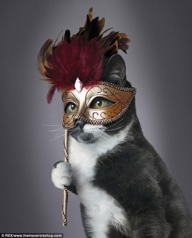 Серо-белая кошка в маске