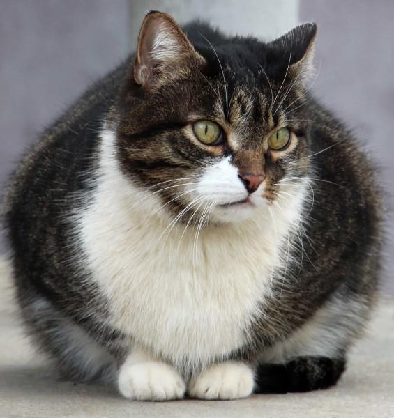 Очень серьезный кот