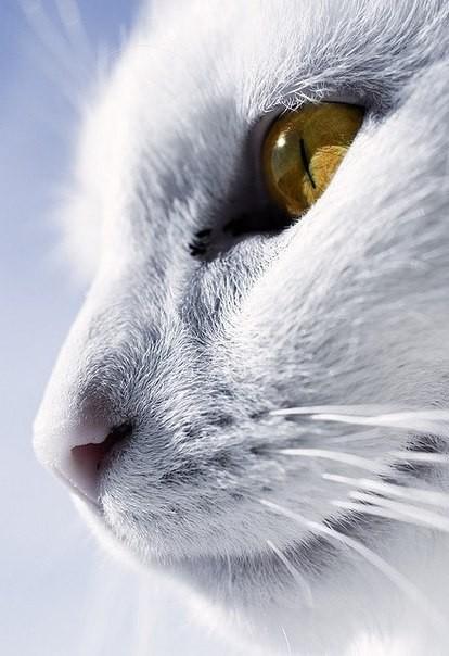 Хитрый взгляд кота