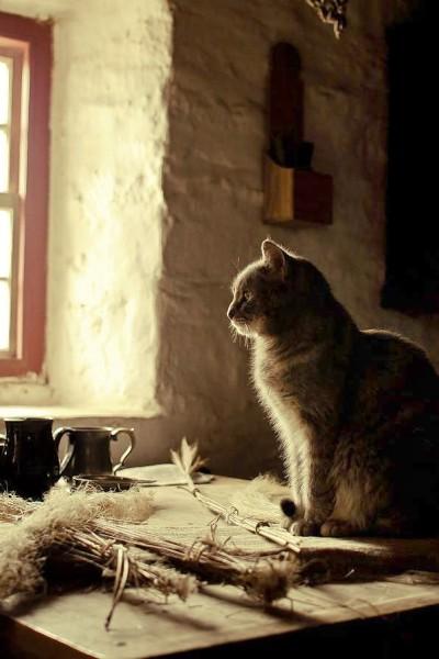 Кошка из дома лесной ведьмы