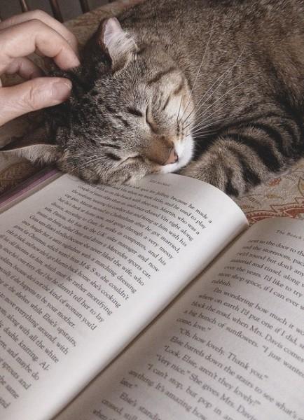 Кот заснул, читая книгу