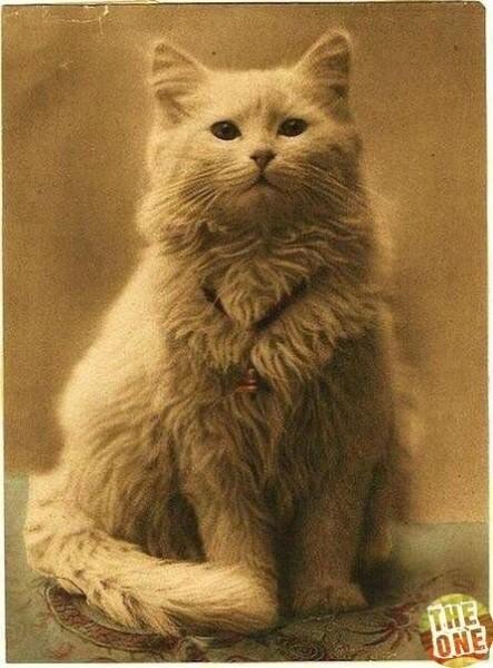 Самое первое фото котика