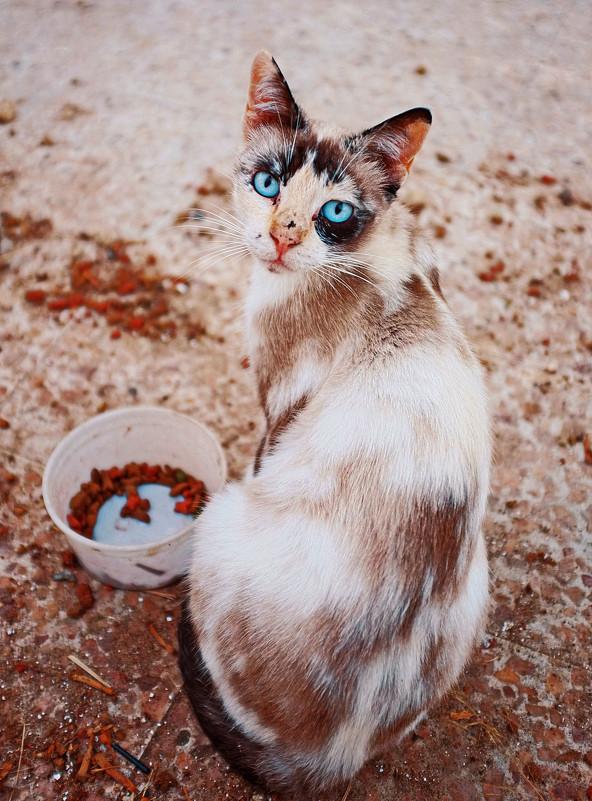 Красивущая бездомная кошка