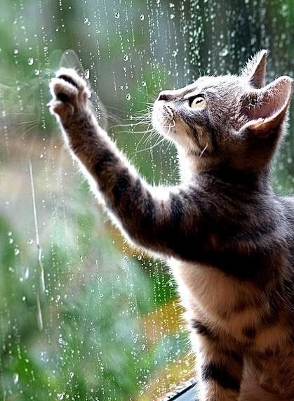 Котенок и дождь