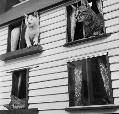 Приют Кошкин дом 1950 год