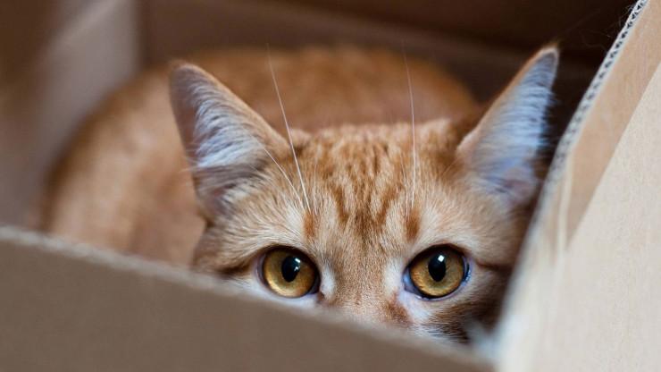 Рыжий кот сидит в коробке