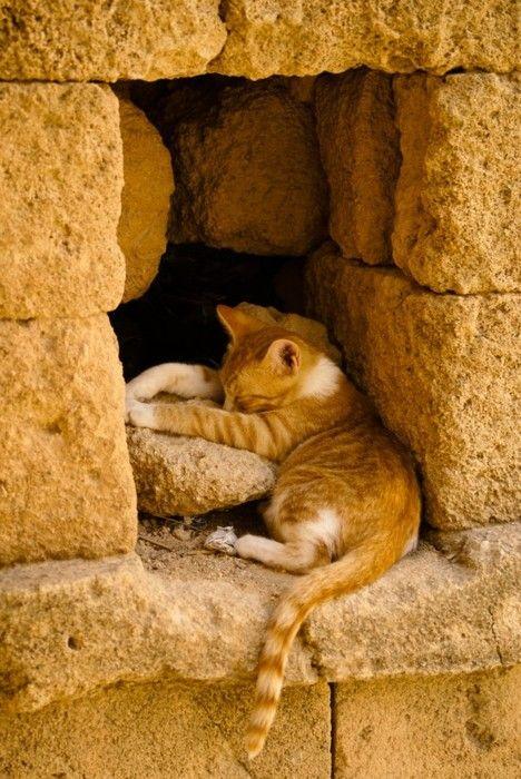 Пещерный рыжий котенок