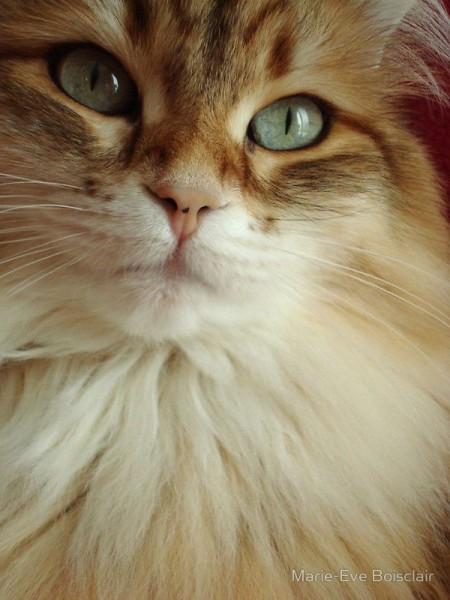 Пушистая кошка с большими глазами