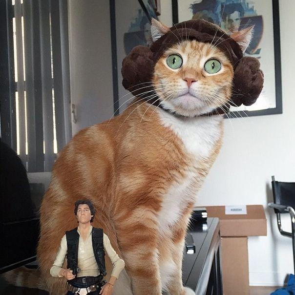Рыжий кот в шапочке