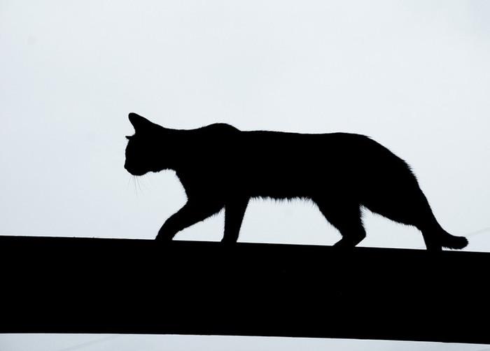 Черный кот идет по крыше
