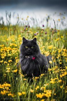 Серая кошка в желтых цветах