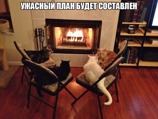 Удачный план котов будет составлен