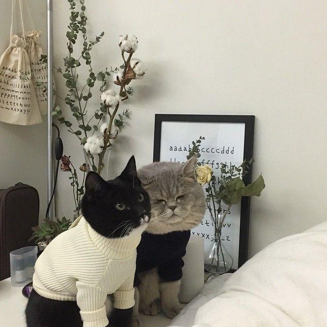 Коты ганстеры