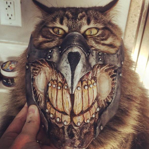Маска кота картинки