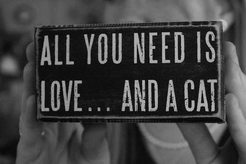 Всё, что вам нужно — это любовь… и кот.