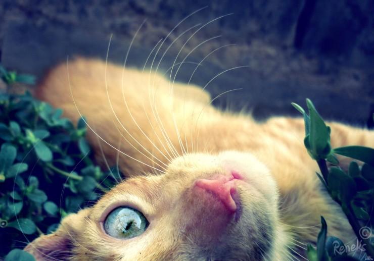Глаза рыжего кота