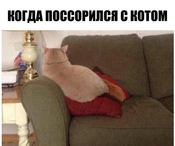 Когда поссорился с котом