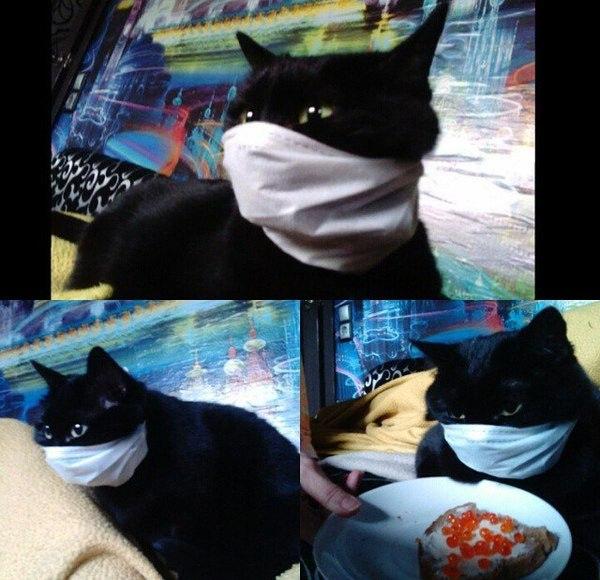 Самые ржачные приколы про котов