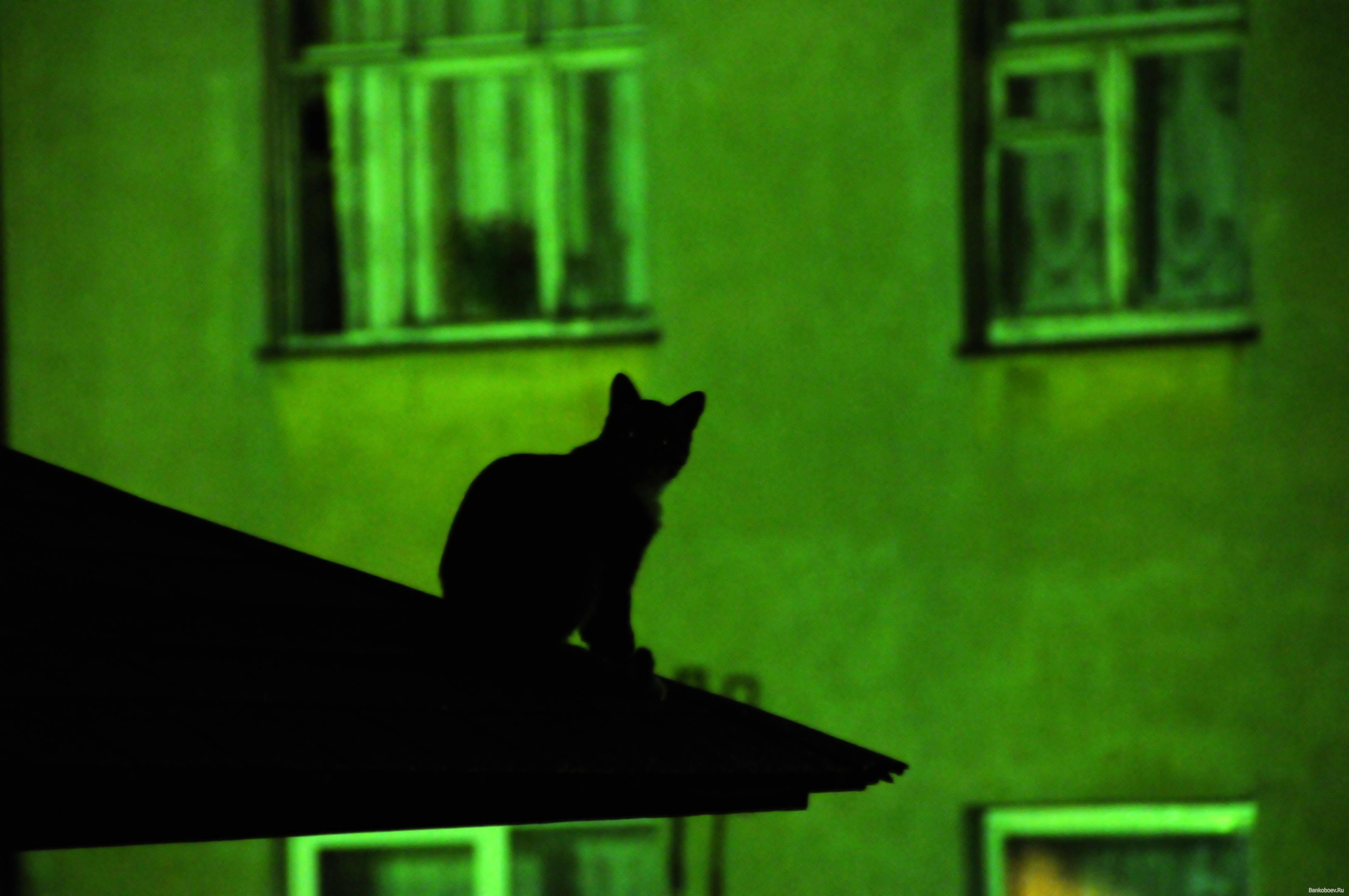 Черный кот на зеленом фоне на крыше