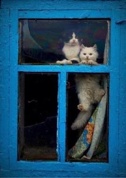 2 Кота смотрят в окно