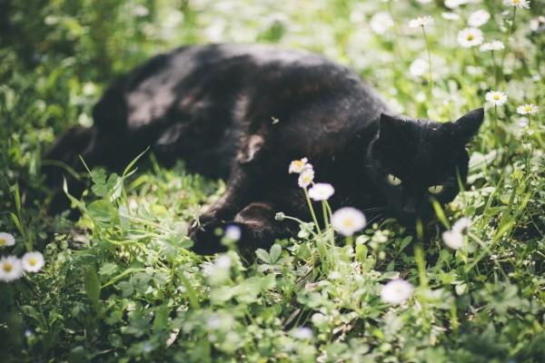 Фото грациозных кошек