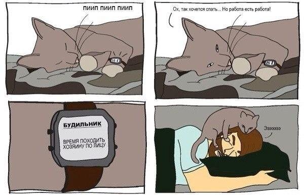 Комиксы про кота и человека
