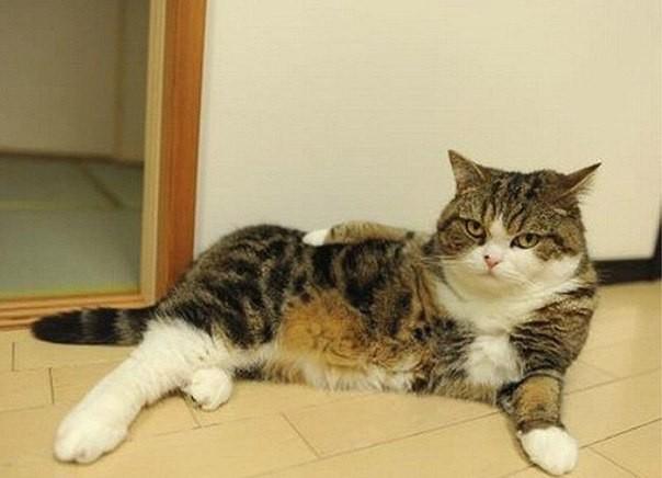 Не скромный кот