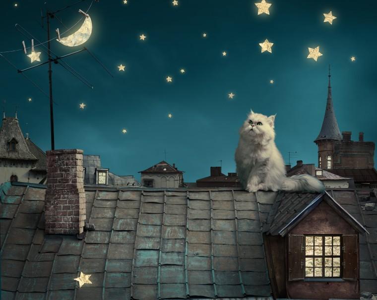 Белый кот на крыше смотрит на месяц