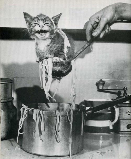 Суп с котом фото