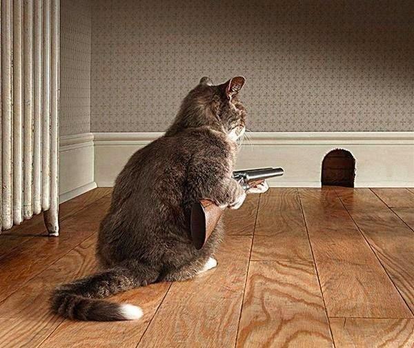 Кот и мышиная норка